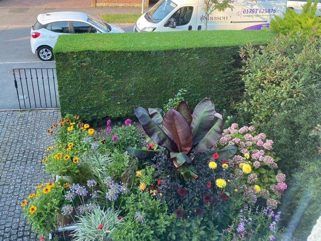 Home Garden From Window