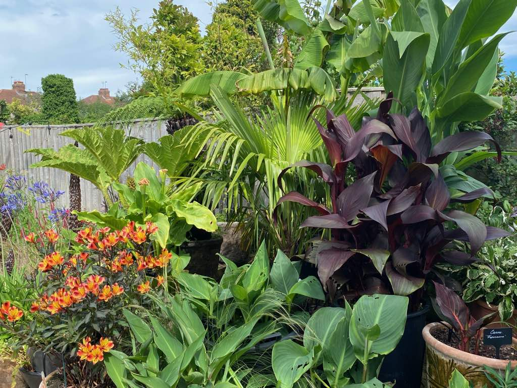 We LOVE tropical plants & every year the display gets bigger!