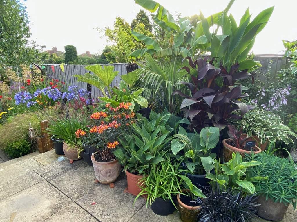 Home Garden Tropical Pots