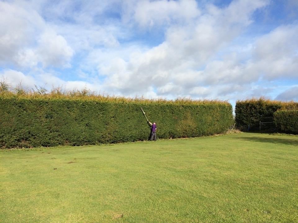 Large hedge cutting