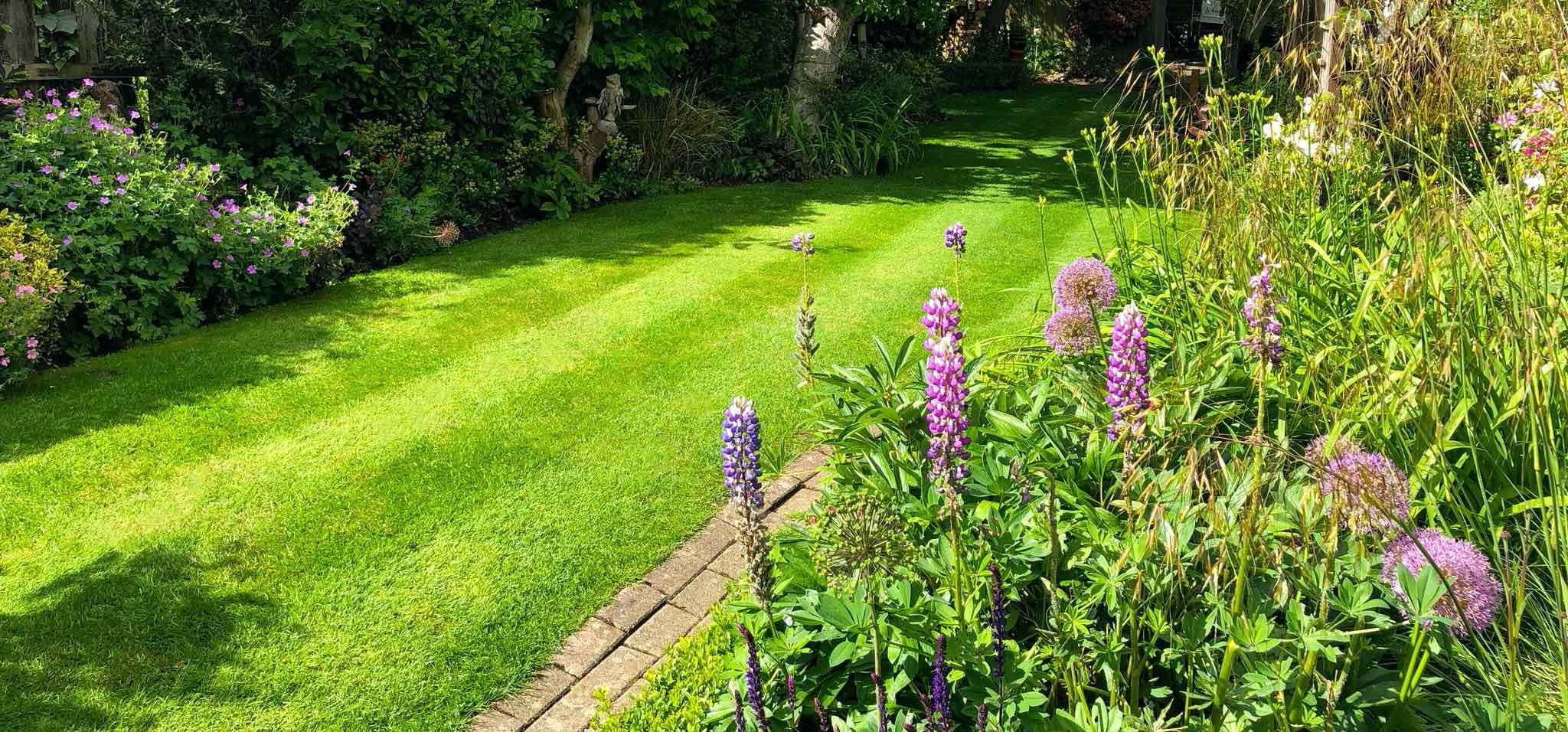 Green lawn treated with fertiliser in garden with lots of flowers
