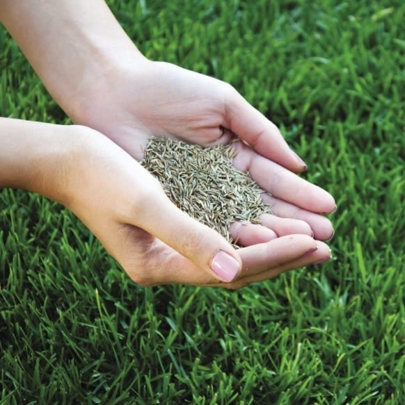 Lawn seed in hands square