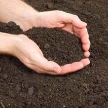 top dressing soil