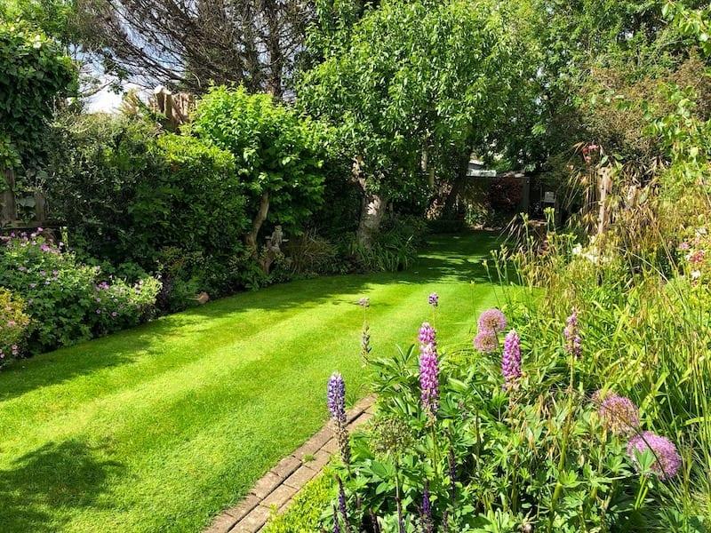 Home lawn jpg
